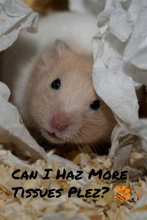 Best Hamster Bedding: The Ultimate Guide For Syrian, Robo