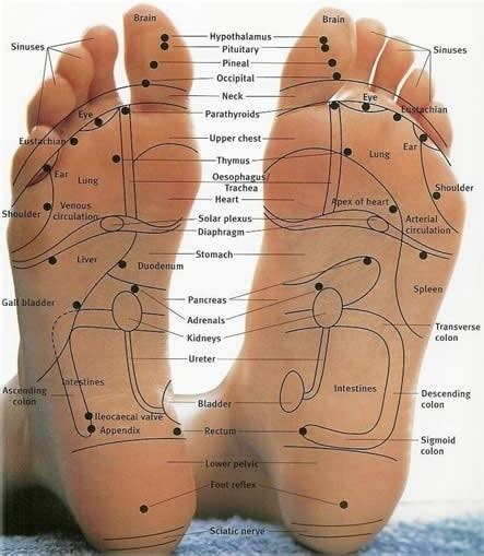 Reflexology for Sinus Relief - BodyQuirks