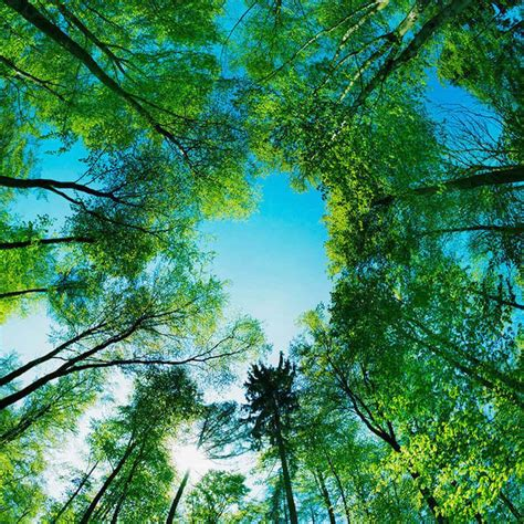 REFORESTATION | planting trees - on a global scale