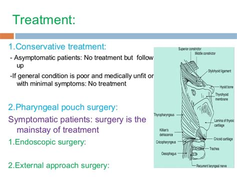Pharyngeal pouches