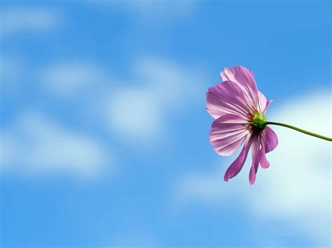 Under the blue sky flowers-Fresh flowers photography