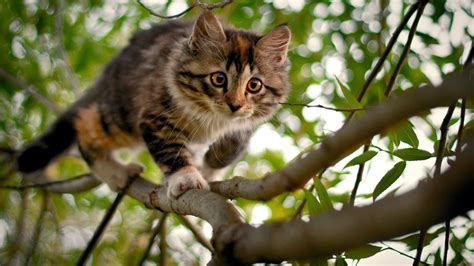 nature, Cat Wallpapers HD / Desktop and Mobile Backgrounds