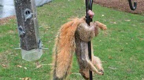 14 Wild Animals Stuck in Weird Places! - The Hunting News