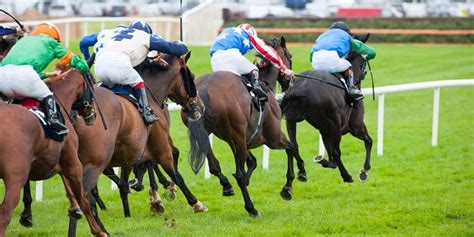 Sea The Sun leads BetBright's quest for Tipster Challenge