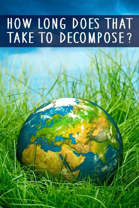 How Long Does It Take to Decompose? - HealthPositiveInfo