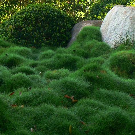 Ground Cover | Thinking Outside the Boxwood