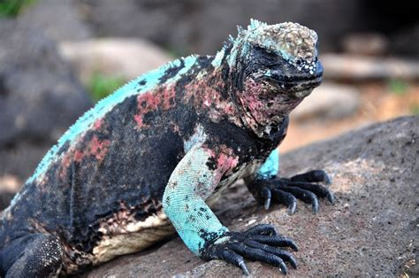Galapagos Islands Animal List, Facts, and Pictures