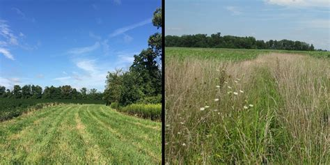 To Mow or Not to Mow Your CRP? - Seneca Conservation District