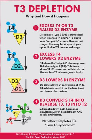 Rationale: Low T3 syndrome, part 2 – Thyroid Patients Canada