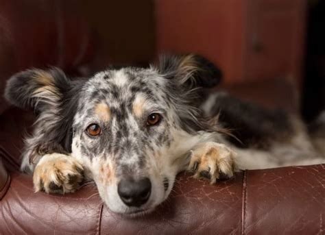 Imodium for Dogs: Is it a Good Idea? | petMD | Diarrhea in