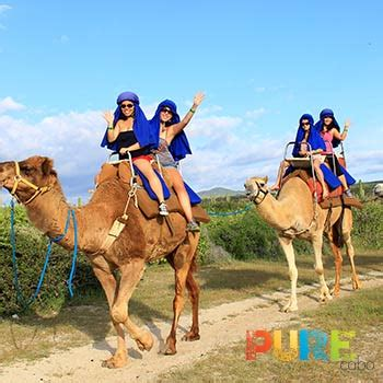 Cabo Camel Ride   Camel Rides in Cabo by Pure Cabo Conciegre